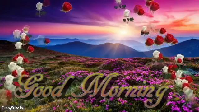 Good Morning Devotional Saturday Status Video Good Morning Video Good Morning Gif Good Morning Video