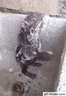 Bizarre Rat Washes Itself Like Human