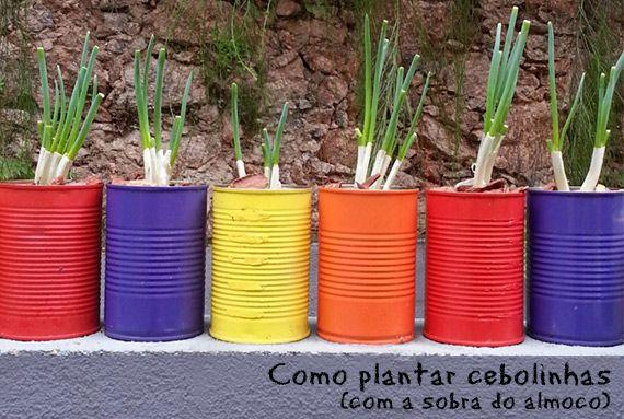 Como plantar cebolinha, com aquela que você usou no almoço. - dcoracao.com - blog de decoração
