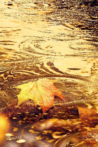 32 Animated Pictures Autumn Leaves | 32 Imágenes Animadas Hojas de Otoño - 1000 Gifs