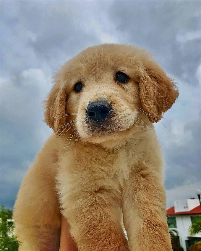 Animalbackgroundiphone Animalwallpaperiphone In 2020 Cute Puppy Wallpaper Cute Dog Wallpaper Puppy Wallpaper Iphone
