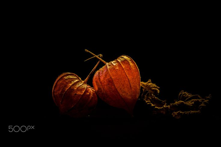 Physalis - USing a small led i take this image to study light effects overs long exposures.