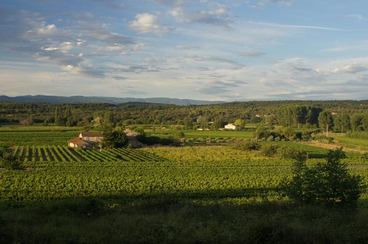 Winnice oglądane z tarasu kawiarenki w Menerbes - Prowansja