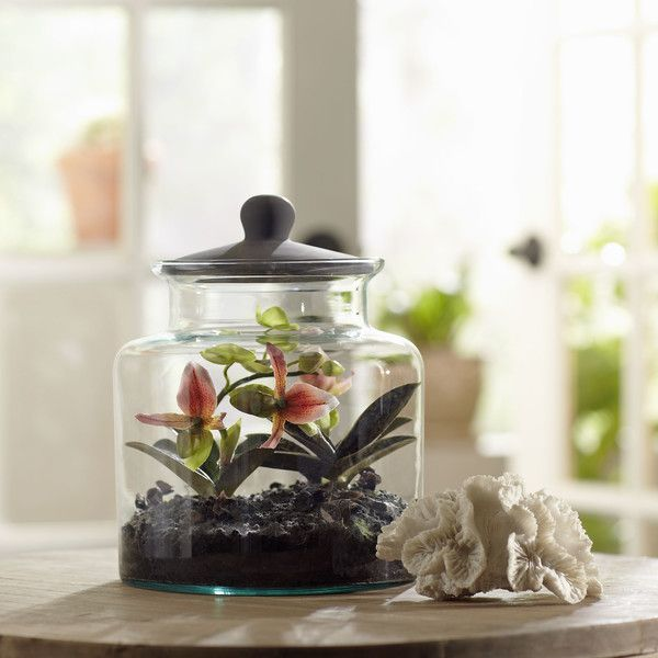 Birch Lane Faux Mixed Slipper Orchid Terrarium with the coral I have...master bath