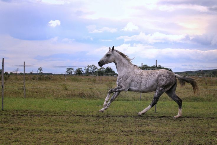 My dappled grey horse. The most beautiful thing I've ever seen ❤