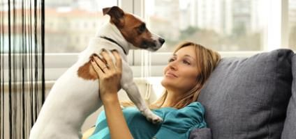The 10 Best Apartment Dogs: Why Size Doesn't Matter   Dogster