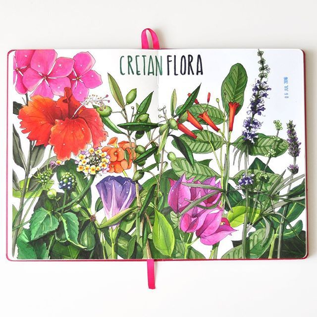 Cretan flora  #traveljournal #travelbook #markers #copicart #copic #sketch #sketchbook #botanicalart #botanicalillustration #visualjournal #artjournal