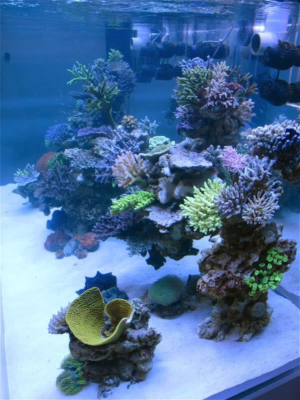 DSPS tank from Thailand (1000 gallon+) - Page 51 - Reef Central Online Community