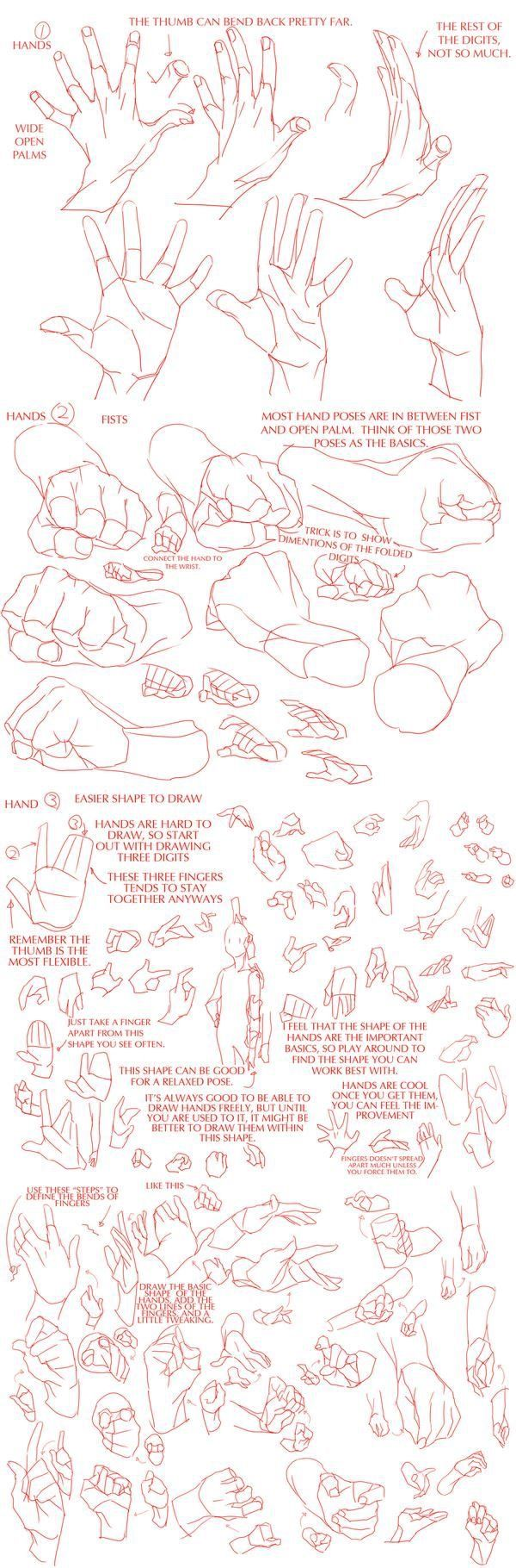 Hand anatomy for artists