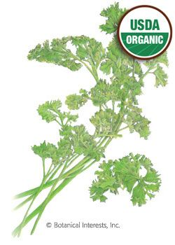 Parsley Moss Curled Organic HEIRLOOM Seeds - Botanical Interests (to grow my healing herb garden)