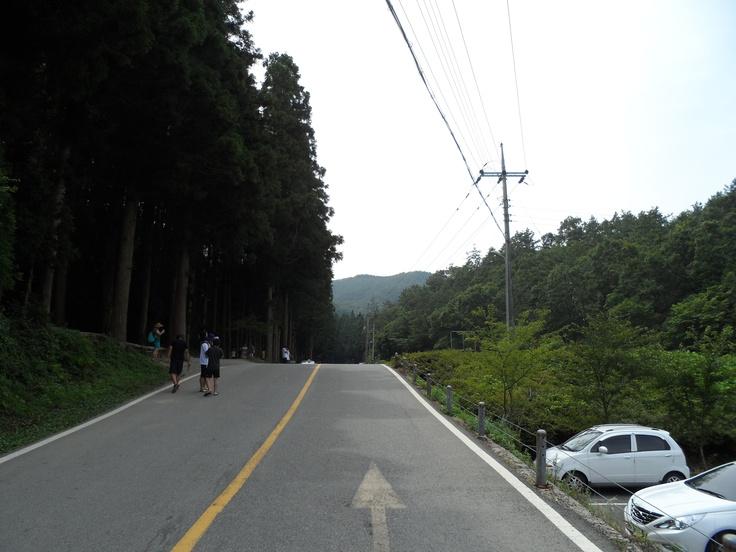 한국카메라 한국을 담다-11일차 Photo by LeeJuDot / Samsung MV800 / in BoSeong DaWon Detail : http://www.cyworld.com/LeeJuDot/3470038