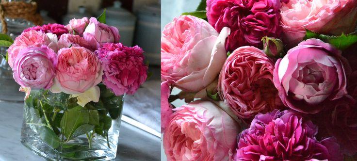 roses#flowerpower#pink#rosa#B&Bcabiancadellabbadessa