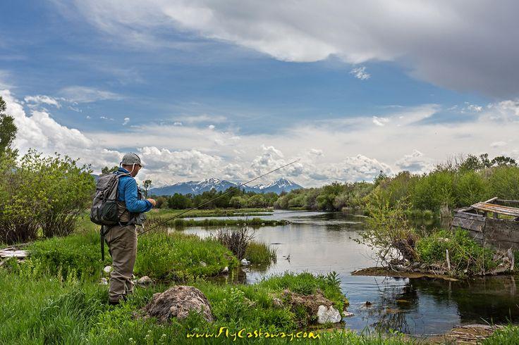 Nelson Spring Creek, Paradise Valley - Montana.