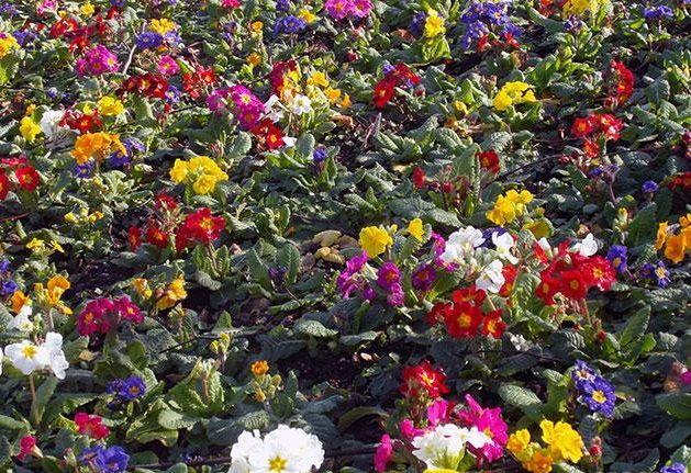 Kakiye tsvety mozhno sazhat' v maye v otkrytyy grunt semenami
