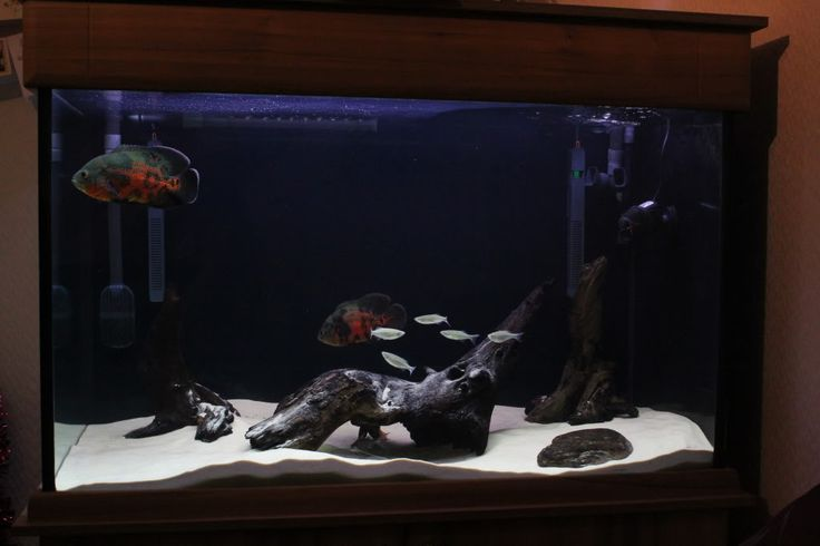 Tiger oscar hardscape Pets Pinterest Tigers Oscar fish and