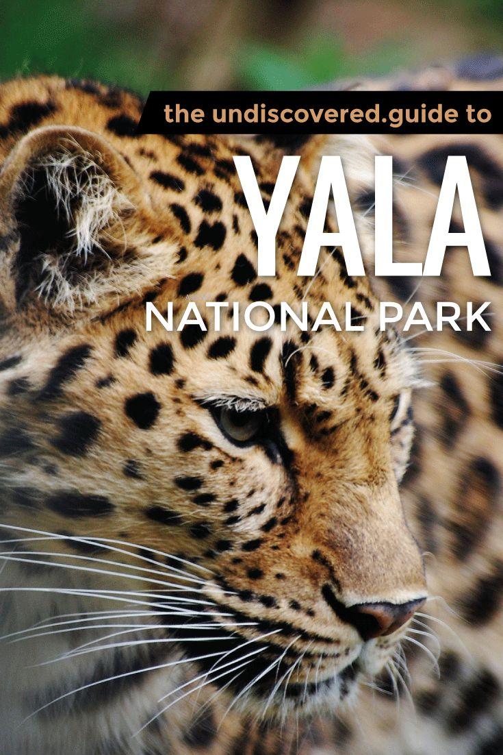#Safari in Yala National Park, Sri Lanka, to see leopards, elephants and black bears in the wild #SriLanka #Travel