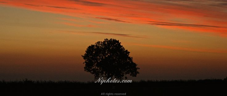 Tree in the shadow of a sunset, Tandragee, Craigavon, County Armagh, Northern Ireland.