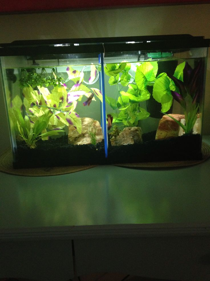 17 best images about betta fish tanks on pinterest betta for Split fish tank