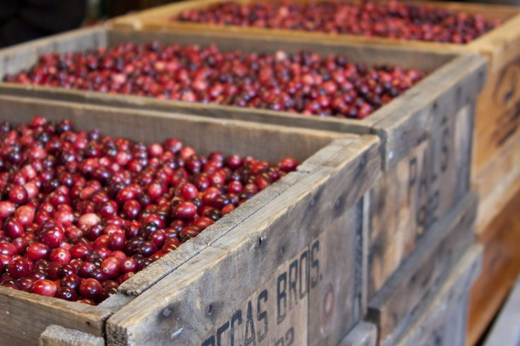 Annie Walker's family landed with the Mayflower in 1620. They've been growing cranberries on Cape Cod ever since.