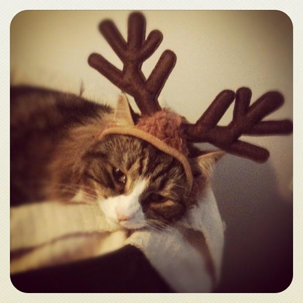 Christmas #cat
