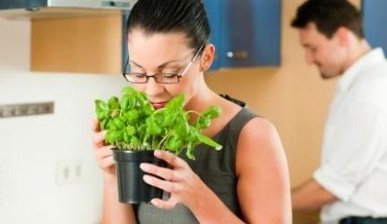 O manjericão para além de ser uma planta aromática que deixa um cheiro bem gostoso, é uma erva bem legal para cozinhar. Por isso veja como o pode plantar em casa :) #manjericão #plantas