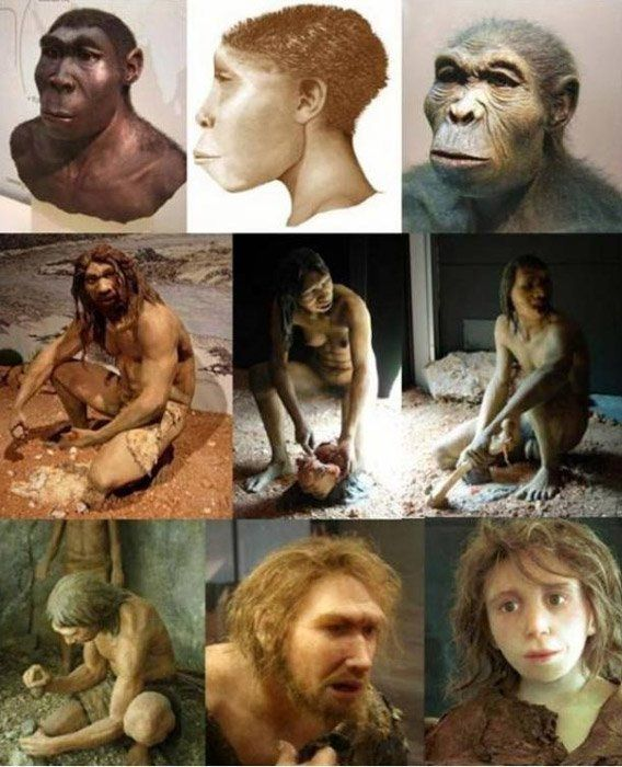 A mix of hominid (genus Homo) depictions; (from right to left) H. habilis, H. ergaster, H. erectus; H. antecessor - male, female, H. heidelbergensis; H. neanderthalensis - girl, male, H. sapiens sapiens. 7.2 MILLION-YEAR-OLD PRE-HUMAN FOSSIL SUGGESTS MANKIND AROSE IN EUROPE NOT AFRICA