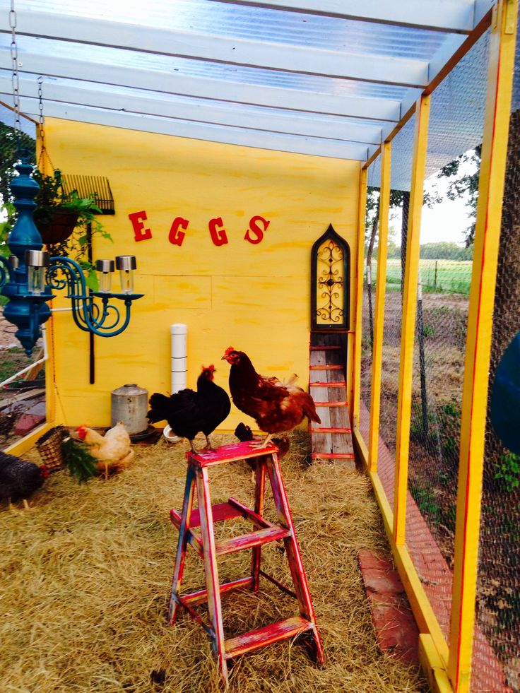 Chicken toys - ladders, chandelier, hanging plants More