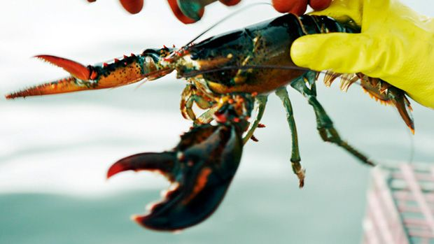 Canadian lobster industry faces tough U.S. competition Maine poised to take big bite out of Canadian lobster market, P.E.I. MLA says