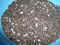 gomasio i smalec sezamowy - na zdrowie