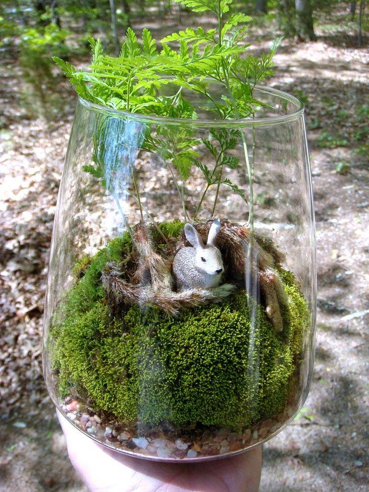 I am definitely putting a rabbit's foot fern in my terrarium