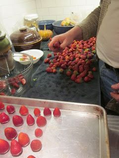 Preparing strawberries for freezing. Wash in water with vinegar. Remove the stems and place the individual berries on cookie sheets. Put the cookie sheets in the freezer for a couple hours. Then, when the strawberries are partially frozen, place them in freezer bags. Because of the extra effort, the strawberries don't freeze in one great big block and can be picked out individually for use.