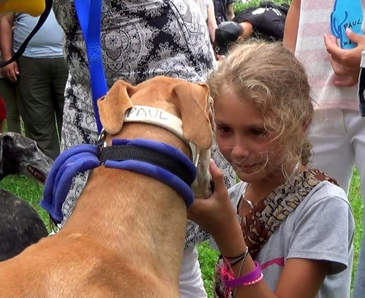 SOS Levrieri 30 Agosto 2014 arrivo Galgo.  Love this video!  (Grab a box of tissues before watching).