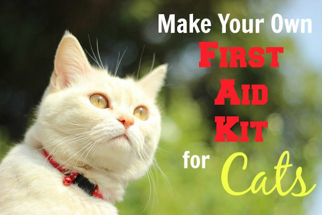 How to Make Your Own First Aid Kit for Your Cat | Pawsitively Pets