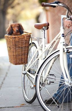 Dog in the basket!  vw