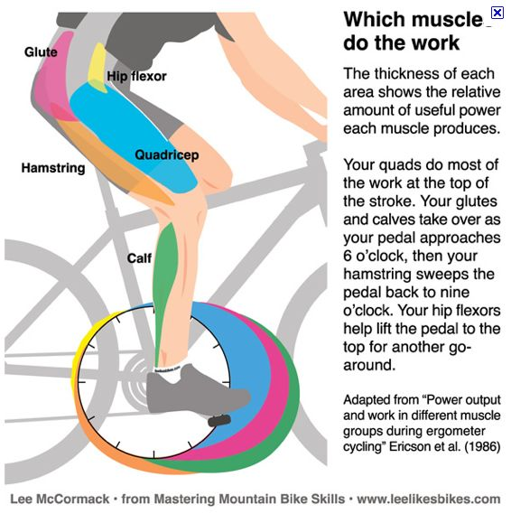 Muscles Spinning Bike | Bike Spin