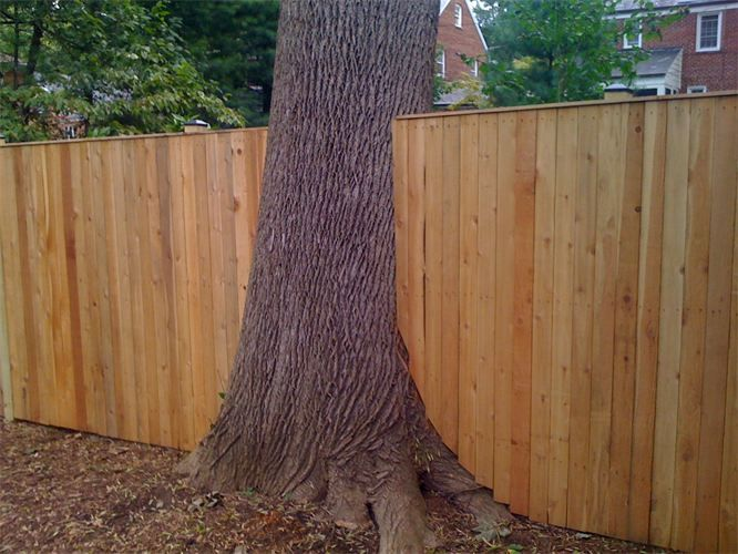 What to do with a tree in fence line google search for Building a fence around a garden