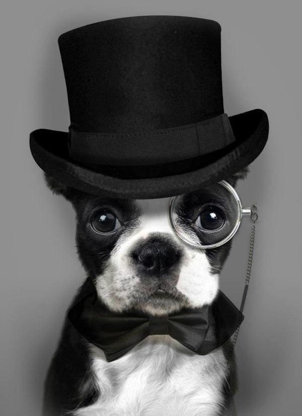 Perro elegantemente vestido para la cena de nochebuena :)