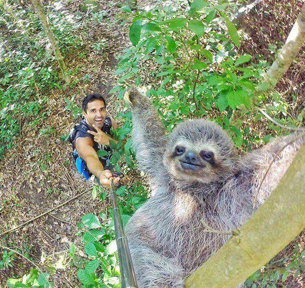 Homem tira selfie com bicho-preguiça e bomba na web