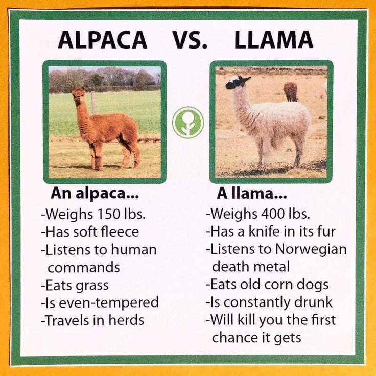 Alpaca vs. Llama http://ift.tt/2xPVhX9