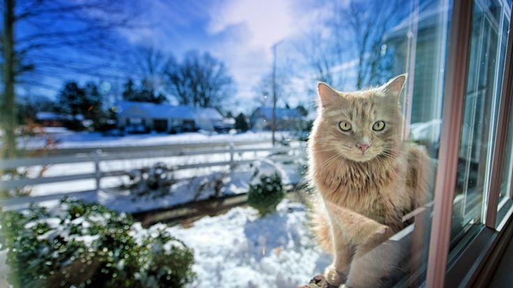 Katze im Fenster, Schnee, Winter, Hintergrundbilder - 1920x1080 Full HD