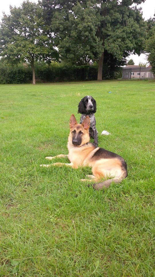 Dog training, animal behaviour problems, Vet transportation, dog day care and home boarding service. Norwich and South Norfolk and the Waveney area of Suffolk. For more information please  Email:info@k9supportservices.com