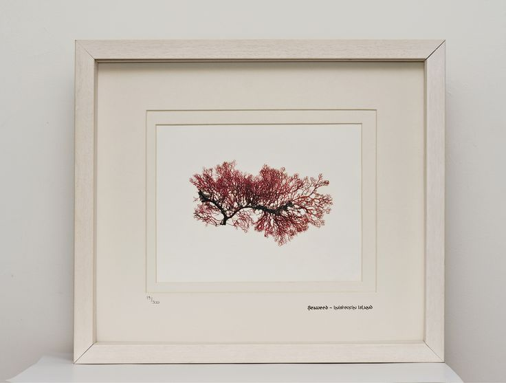 Limited Edition HAND PRESSED SEAWEED Prints from Connemara Shores available soon on www.artisaninishbofin.ie