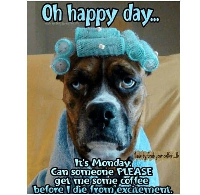 Please Coffee Sarcasm Mondayssuck Https Www Instagram Com P B9poxf9jlm7uyfta56r1 Funny Good Morning Memes Morning Quotes Funny Funny Good Morning Quotes