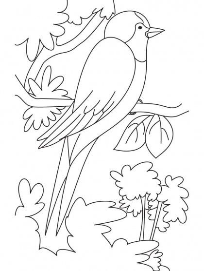 Swallow Bird Perched On A High Branch Coloring Page Free Download Best Coloring Pages Bird Coloring Pages Coloring Pages Bird Template