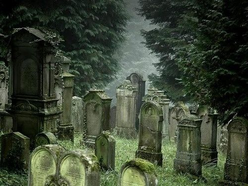Love this pic and would love to see a graveyard like this ...