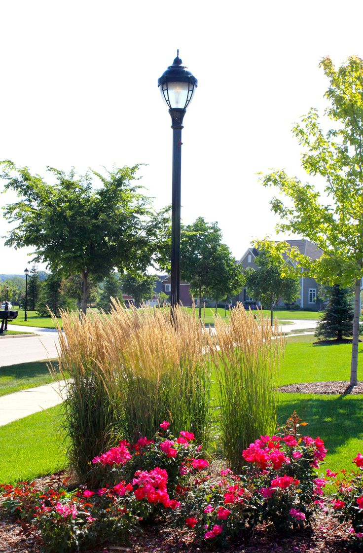 using tall grasses in landscaping