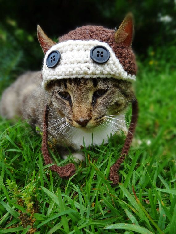 Aviator Cat Hat Dog Hat -  Aviator Cat Dog Costume - Pilot Hat Costume for Cats and Small Dogs (OMG! Mr. Bates needs this hat!)