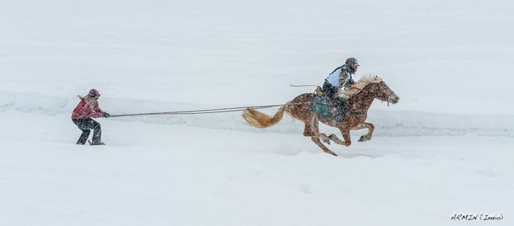 Horse races in winter @Hafling/Avelengo