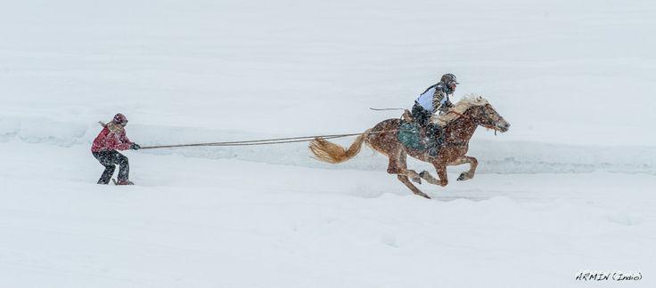 Horse races in winter @Hafling/Avelengo