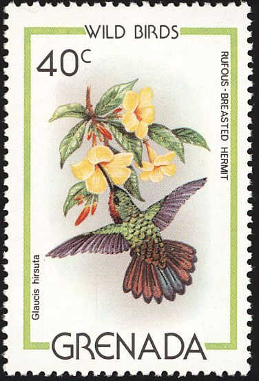 Rufous-breasted Hermit stamps - mainly images - gallery format